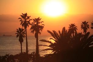 フェニックスのシルエットと夕日の写真素材 [FYI03177147]