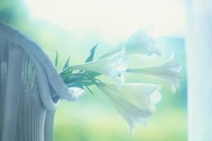 椅子の上の花の写真素材 [FYI03177212]