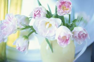 花瓶に生けられたチューリップの写真素材 [FYI03177225]
