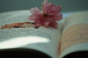 本と花の写真素材 [FYI03177230]