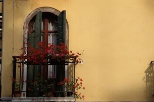 窓辺の赤い花の写真素材 [FYI03177235]
