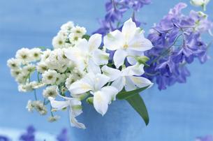 バケツの中の花たちの写真素材 [FYI03177320]