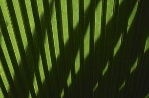 ヤシの葉影の写真素材 [FYI03177428]