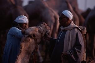 ラクダ市場にて   カイロ エジプトの写真素材 [FYI03177455]
