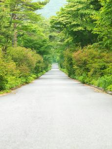 新緑と小道の写真素材 [FYI03177478]