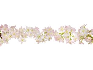 桜の花で作った横一線の写真素材 [FYI03177493]