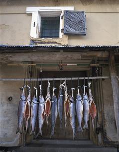 寒干しされた魚(鮭) 宮古市 岩手県の写真素材 [FYI03177535]