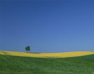 春色のコントラストの丘  バイエルン地方 ドイツの写真素材 [FYI03177547]