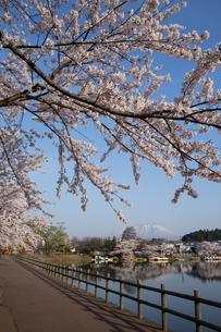 桜咲く高松の池の写真素材 [FYI03177702]