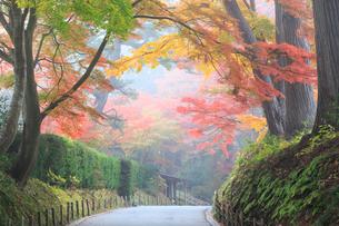 霧の中尊寺参道の紅葉の写真素材 [FYI03177771]