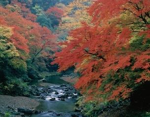 紅葉の渓谷 京都の写真素材 [FYI03177831]