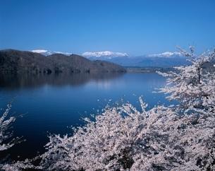 桜の釜房湖から蔵王連山   宮城県の写真素材 [FYI03177854]