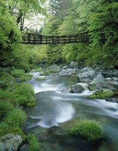 奥祖谷かずら橋  東祖谷山村 徳島県の写真素材 [FYI03178206]