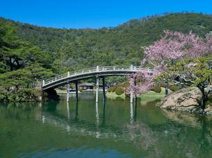 彼岸桜咲く栗林公園の写真素材 [FYI03178510]