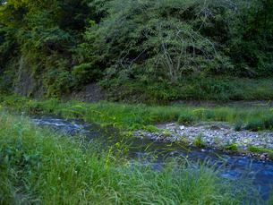 ゲンジボタルの舞う川の写真素材 [FYI03178546]