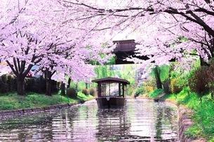 舟と桜の写真素材 [FYI03179256]