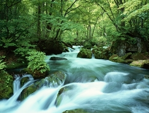 奥入瀬渓流の阿修羅の流れ 青森県の写真素材 [FYI03180056]