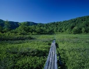 白髪山地の藤駒湿原と青空 藤里町 秋田県の写真素材 [FYI03180084]
