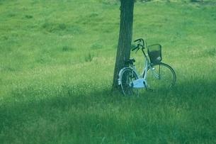自転車と木の写真素材 [FYI03180358]