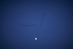 月に雁の群れの写真素材 [FYI03180385]