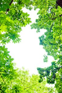 新緑フレームの写真素材 [FYI03180580]