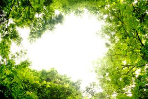 新緑フレームの写真素材 [FYI03180581]