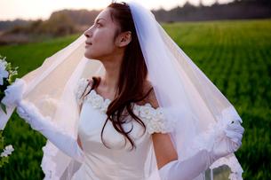 草原の花嫁の写真素材 [FYI03180764]
