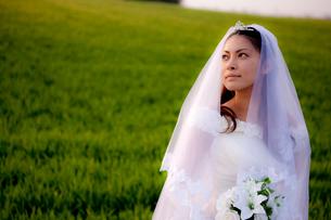 草原の花嫁の写真素材 [FYI03180774]