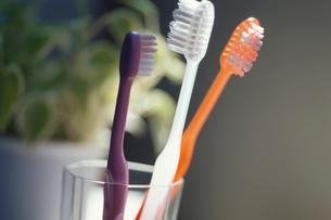 歯ブラシの写真素材 [FYI03181387]