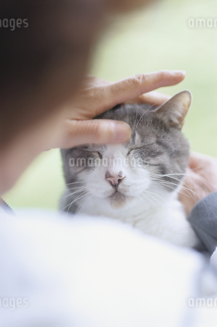 猫の顔をなでるシニア女性の後ろ姿の写真素材 [FYI03181552]