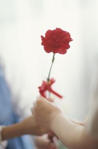 母にカーネーションを贈る女の子の手の写真素材 [FYI03181650]