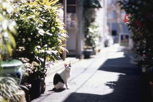 路地に座る猫の写真素材 [FYI03181797]