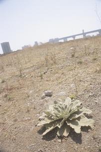 平地に生える植物とビル群の写真素材 [FYI03181812]