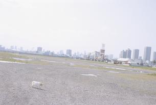 平地を歩く猫とビル群の写真素材 [FYI03181827]
