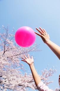桜とピンクのボールの写真素材 [FYI03182045]