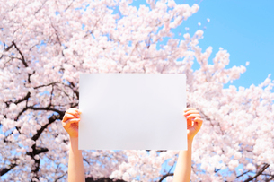 桜をバックに白紙を掲げる手の写真素材 [FYI03182052]