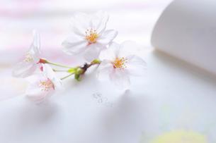 春の章の頁を開いた本と桜の花の写真素材 [FYI03182279]