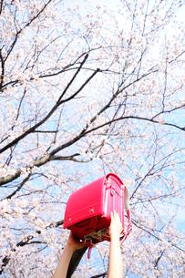 満開の桜の木の下でランドセルを頭上にかかげる子供の手の写真素材 [FYI03182297]
