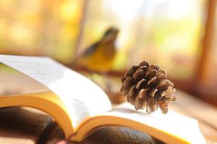 ベランダのテーブルの上に置かれた本と松ぼっくりと小鳥の写真素材 [FYI03182396]