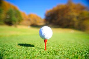 ティーの上にのったゴルフボールとコースと紅葉の写真素材 [FYI03182402]