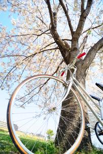 満開のさくらの木の下の自転車の写真素材 [FYI03182462]