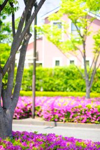 満開のツツジと新緑の街路樹と住宅の写真素材 [FYI03182487]
