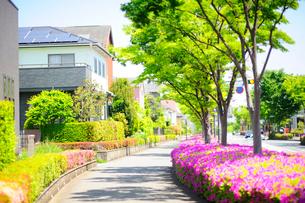満開のツツジと新緑の街路樹と住宅街の写真素材 [FYI03182490]