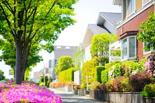 満開のツツジと新緑の街路樹のある住宅街の写真素材 [FYI03182492]