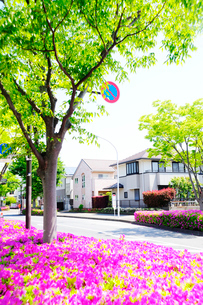 満開のツツジと新緑の街路樹のある住宅街の写真素材 [FYI03182493]