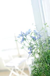 プランターの花と窓辺の写真素材 [FYI03182509]