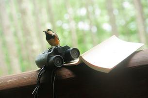 双眼鏡と本と野鳥の写真素材 [FYI03182532]