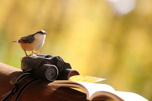 双眼鏡と本と野鳥の写真素材 [FYI03182540]