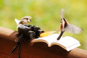 双眼鏡と本と野鳥の写真素材 [FYI03182545]