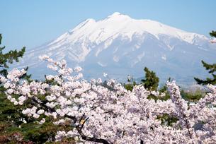 弘前城公園より桜と岩木山の写真素材 [FYI03182943]